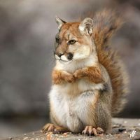 Mountain squirrel by Dwarf4r