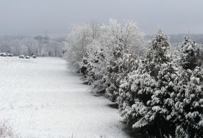 Snow Trees by photowizard