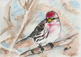 Redpoll by kiti83