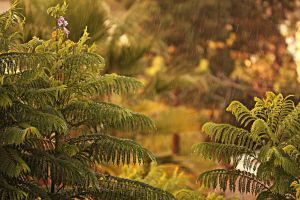 The Rain Amongst The Trees by BenHinman