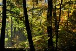 beechen forest IX by Wilithin