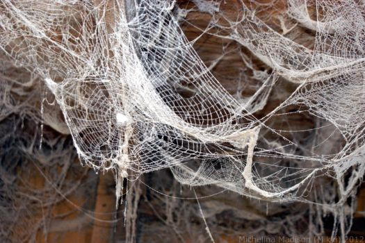 Spider webs 4 by Fire-Fuel
