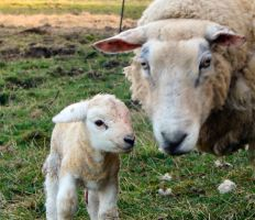 Mother and child... by MODDEYDOO