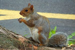 My Squirrelly Buddie by SCT-GRAPHICS