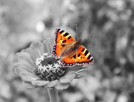 Butterfly, Butterfly by RiaPi