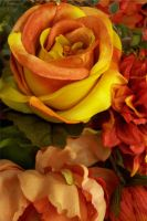 Orange and Yellow Rose by paintresseye
