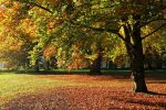 A sunny autumn day by George---Kirk
