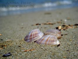 Shells Of Summer Love 2 by annafilip
