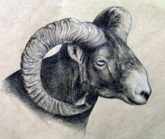 Mouflon drawing by NestCanZ