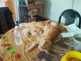 Copper,Angel,DaiChi asleep on the table. by wolfwarrior001