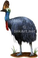 Southern Cassowary by rogerdhall