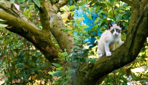 The cat on the tree by skypho