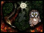 Night Owl by jele