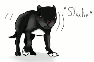 Shaking Chihuahua by Tontora