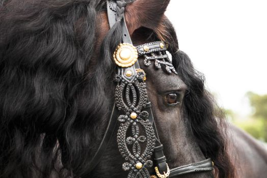 FR Close up side view decorative halter by Chunga-Stock