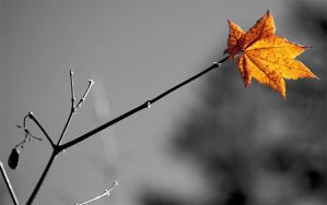 last_leaf by caleum