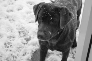 My dog in the snow by CutiieePiiee