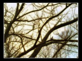 Whispering Limbs by DementdPrncess