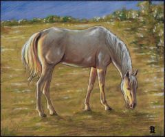 Horse by Piraeuse