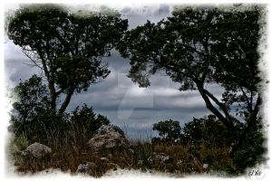 Mico, Texas The Hill Country by DleeKirby