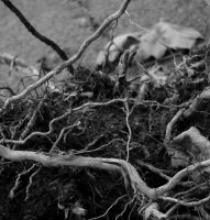 Square-roots by Lynafleder