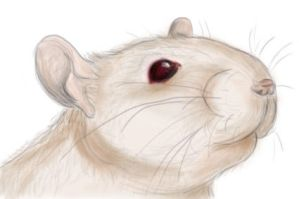 Rat, Puck by connymon