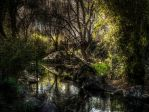 Garden HDR by youwha