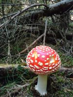 forest and an another toadstool by czmartin
