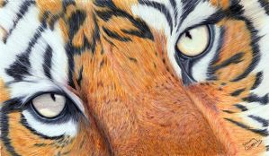 Tiger Eyes by ShannonClements