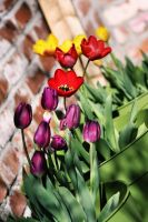 Urban Tulips by SpawnedImages
