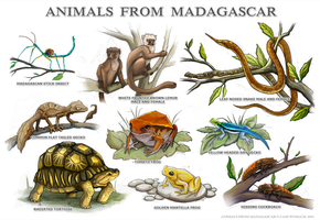 Animals from Madagascar by charfade