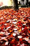 Fall Leaves by EvaGee