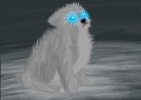 Iki as a puppy by Ameliila