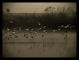 SeaGuls at the River by Mmazare