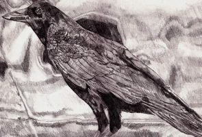 crow in pencil by 7resurrectionvirtues