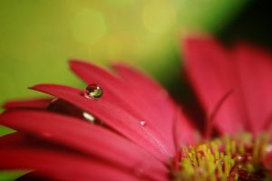 Drops by depicapica