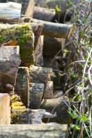 Logs by Lucrecia1337