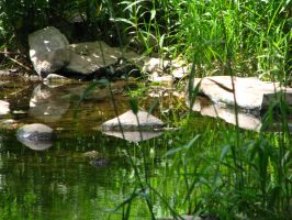 Tohickon Creek 3 by wax-wing