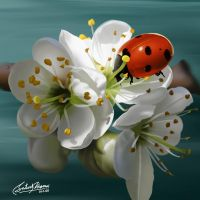 Lady Bird by satishverma