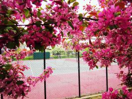 Blossoms Tennis Court - Millennium Park by zackthemac