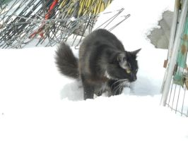 Artemis in snow day 2 17 by dottypurrs