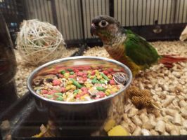 PetSmart Parrot Being All Cute by KrazyKari