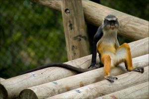 Another Monkey by Vickithtoria