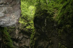 canyon inside a forest by Jhadin