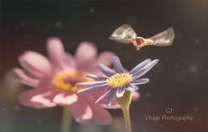 Daisy and the Hoverfly by GJ-Vernon