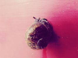 Little Snail by ropa-to