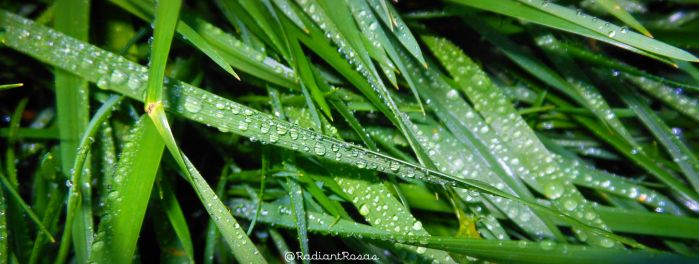 drops on grass by RADIANTROSAS