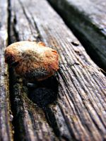 Mini Fungi by JeremyC-Photography