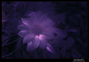Flower Power Infra Red by siulzz
