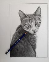 Graphite drawing by mo62